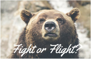 bear-fight-or-flight-cropped